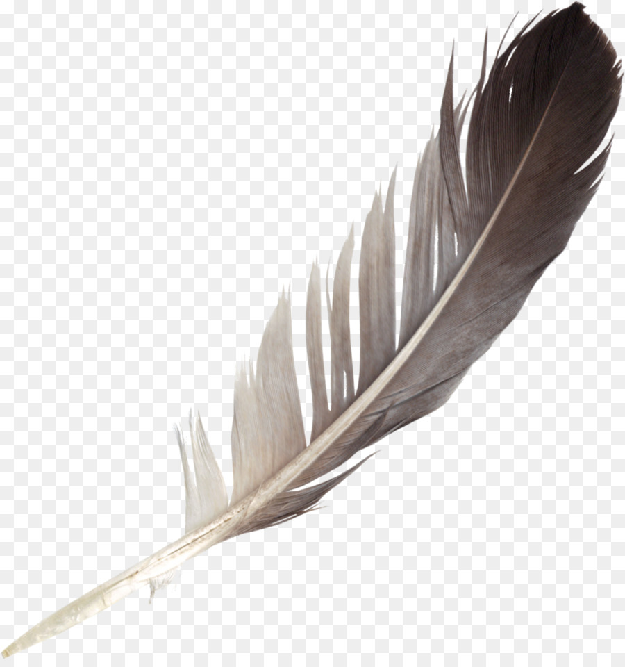 Bird Wing clipart.