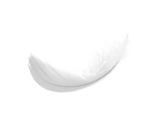 Feather PNG images free download.