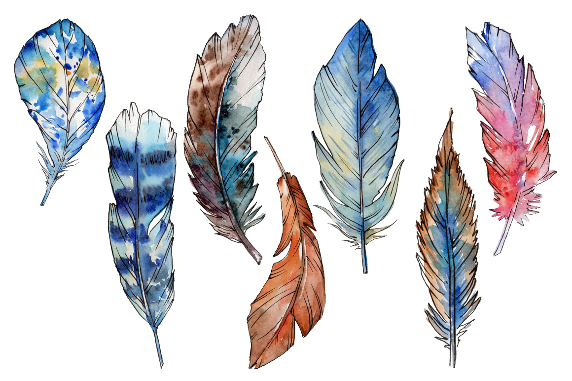 Bird Feather PNG Free Download.