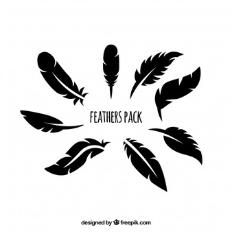 Feather Vectors, Photos and PSD files.