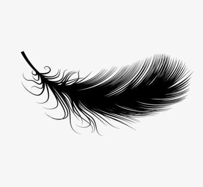 Feathers PNG.