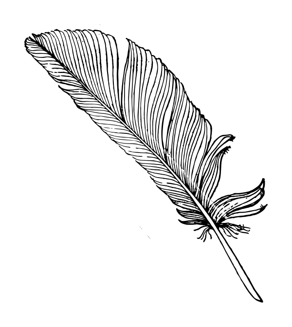 Feather Vector Png, png collections at sccpre.cat.