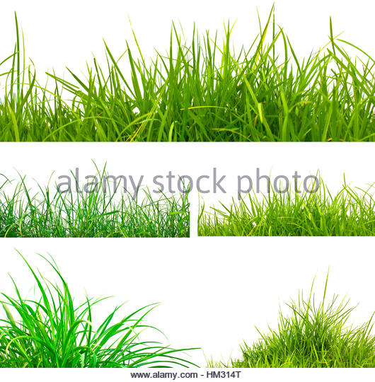 Tufts Of Grass Stock Photos & Tufts Of Grass Stock Images.