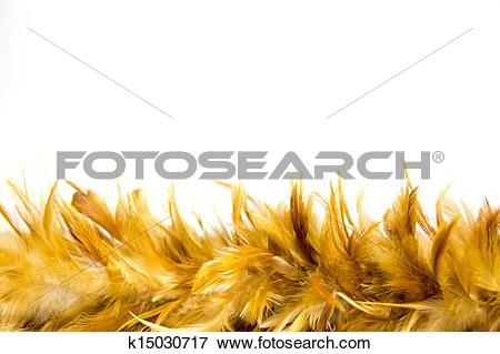 Picture of chicken feather k15030717.