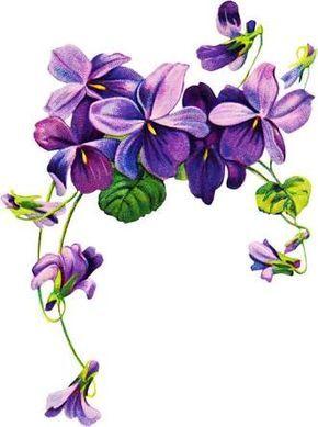 tattoos of violets.