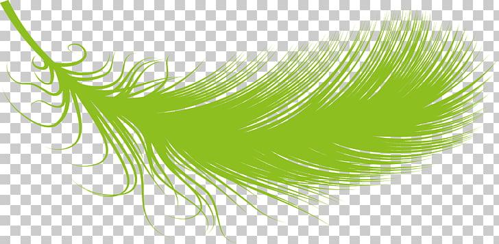 RGB color model Desktop , Feder PNG clipart.