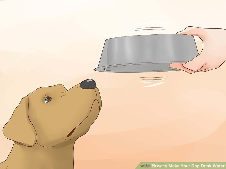 How to Make Your Dog Drink Water: 15 Steps (with Pictures).