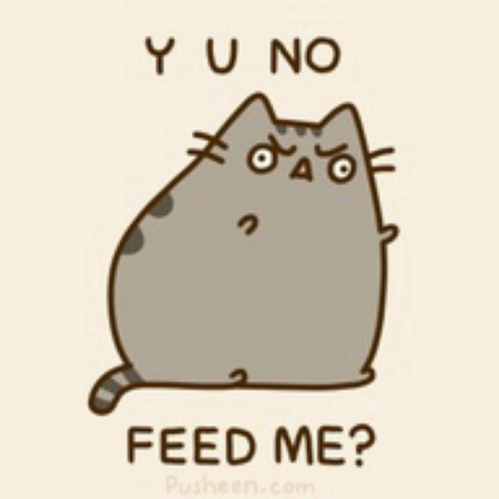 Y U NO FEED ME?.
