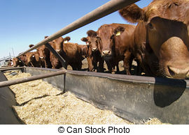 Feedlot Stock Photo Images. 292 Feedlot royalty free pictures and.