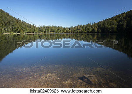 "Stock Image of ""Forest being reflected in lake Feldsee, late."