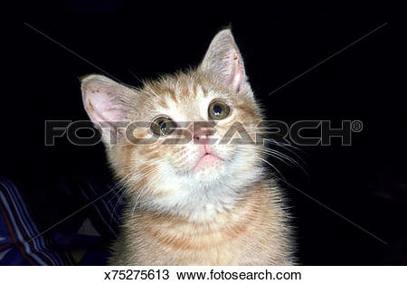 Stock Photo of domestic cat felis domestica x75275613.