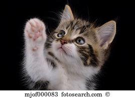 Felis silvestris Stock Photos and Images. 3,812 felis silvestris.