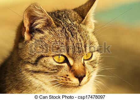 Stock Illustration of Cat. (Felis silvestris catus).