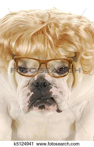 Stock Photography of female bulldog k5124941.