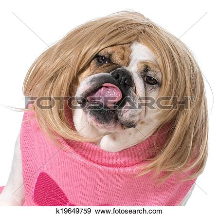 Stock Photograph of female bulldog k19649759.