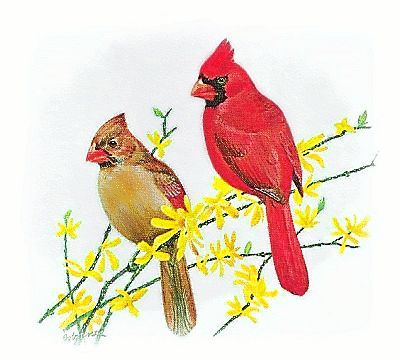 Female cardinal clipart.
