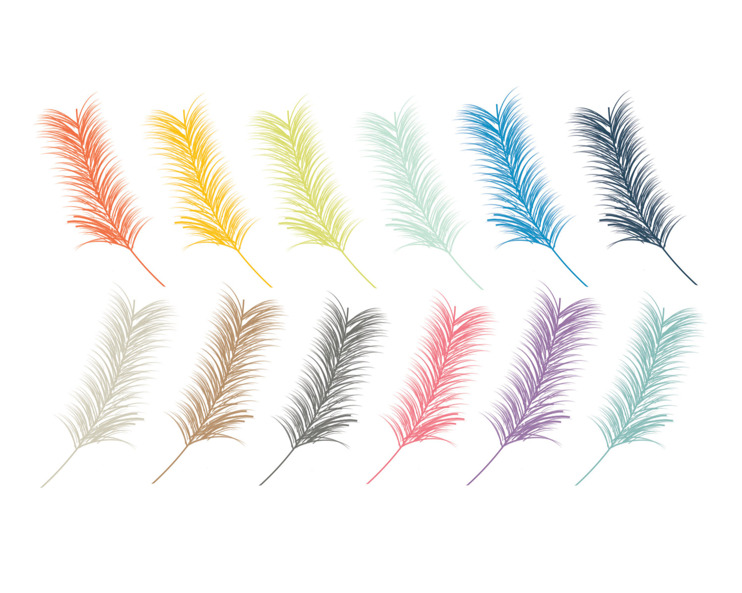 Cardinal Feathers Clipart.