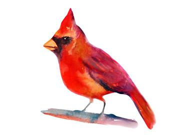Cardinal watercolor.