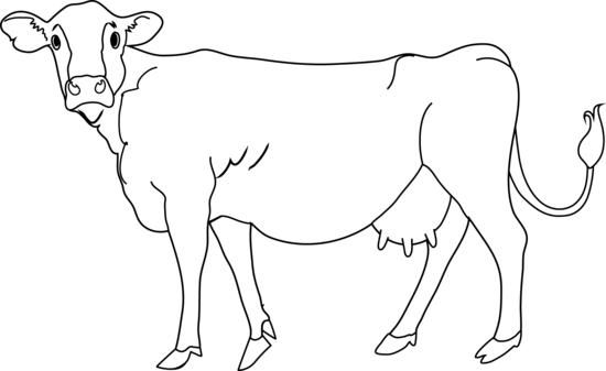 Cow Coloring Page.