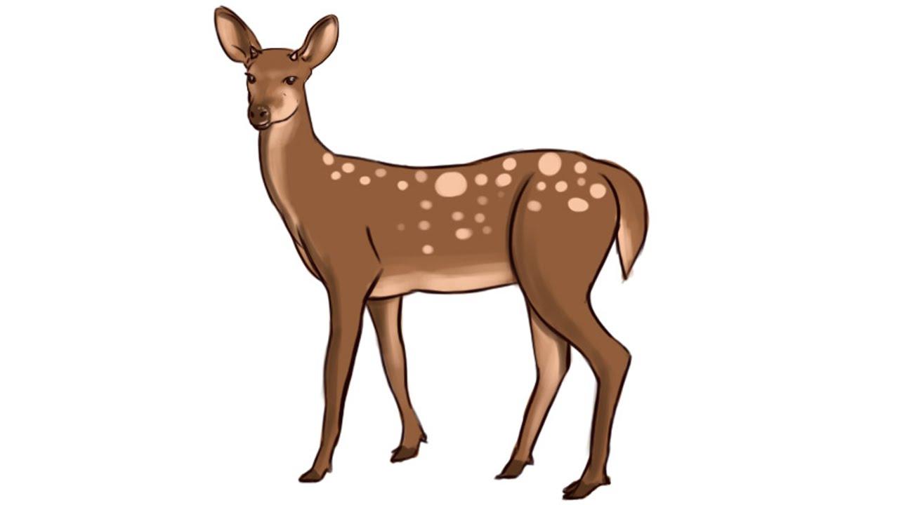 11769 Deer free clipart.
