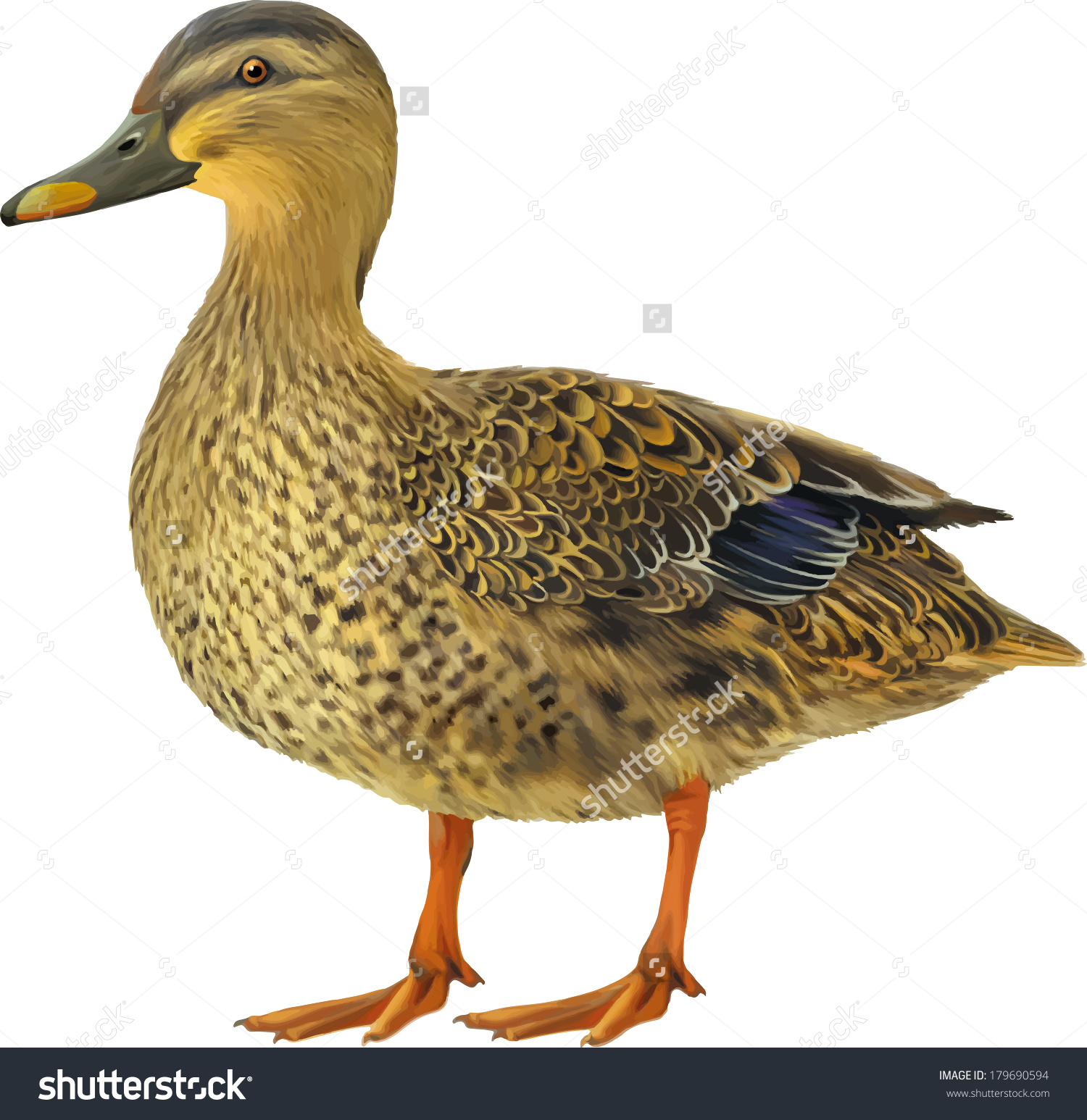 Flying Mallard Duck Clip Art (74+).