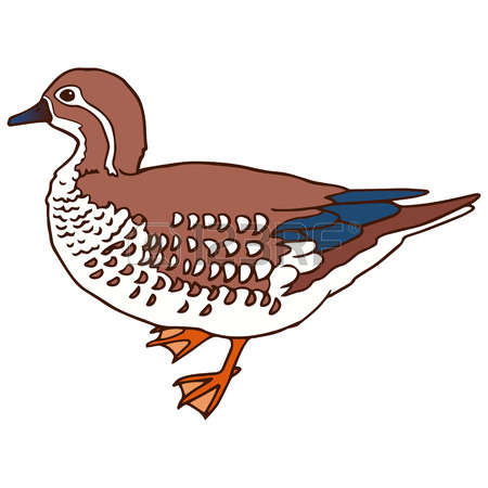 118 Mandarin Duck Stock Illustrations, Cliparts And Royalty Free.