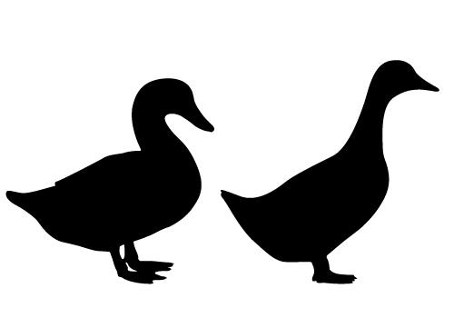 Male and Female Duck Silhouette Vector Free Download.