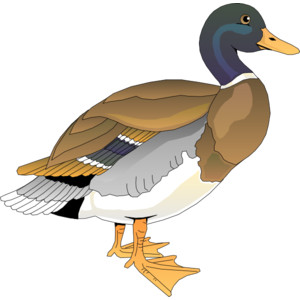Walking Duck clip art.
