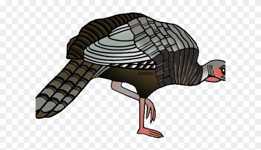Turkey Bird Clipart Female Turkey.