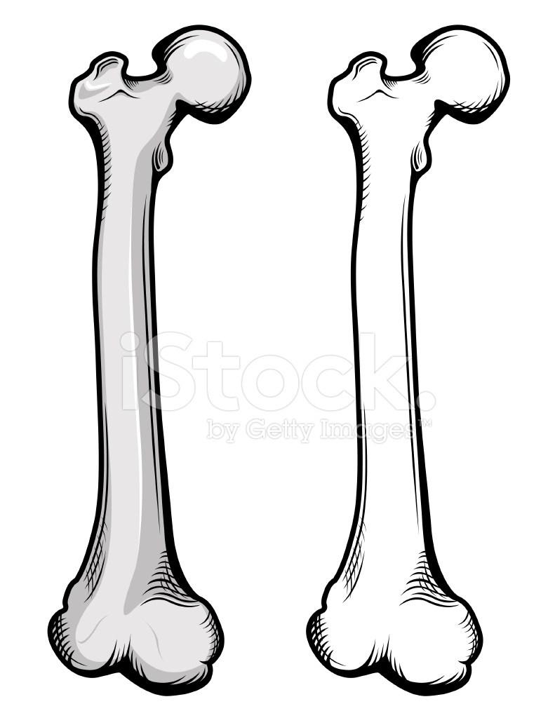 Femur bone clipart 5 » Clipart Portal.