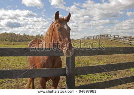 Horse Farm Fence Stock Photos, Royalty.
