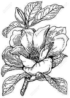 MAGNOLIA Instant Donwload Large Digital Images, vintage botanical.