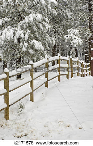 Pictures of Snow Covered Wooden Rail Fence k2171578.