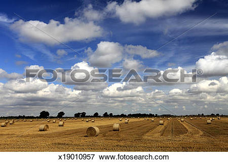 Picture of straw bales fields; near Ely City, Fenland x19010957.