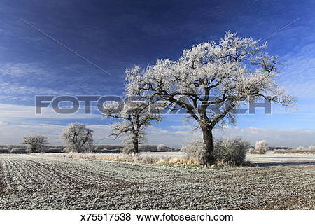 Pictures of winter scene, Fenland fields Ramsey town, Fenland.