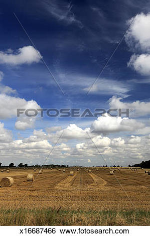 Stock Images of straw bales fields; near Ely City, Fenland.
