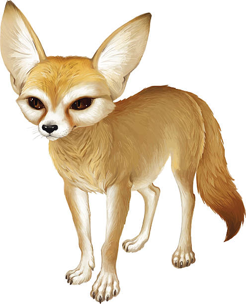 Best Fennec Fox Illustrations, Royalty.