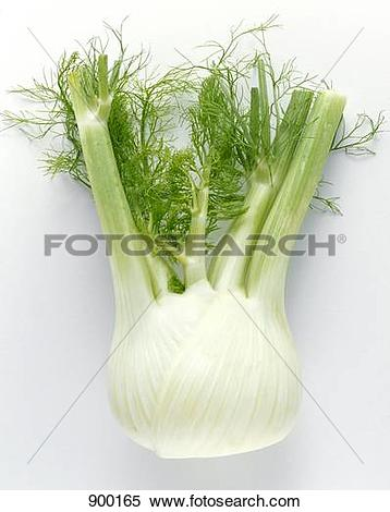 Stock Image of Fennel Bulb 900165.