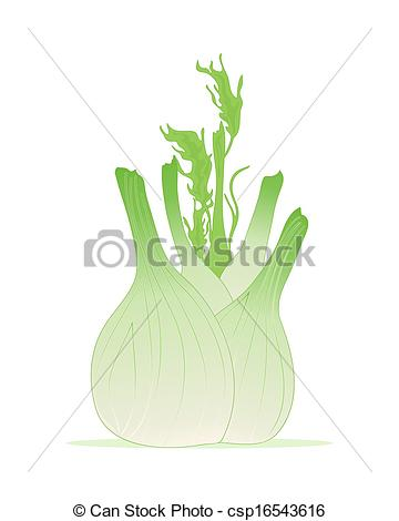 Vector Clip Art of fennel bulb.