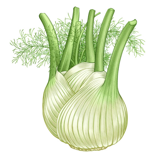 All About Growing Fennel.