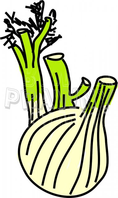 A Fennel Bulb Clip Art Illustration.