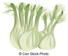 Bulb fennel Clip Art Vector Graphics. 17 Bulb fennel EPS clipart.