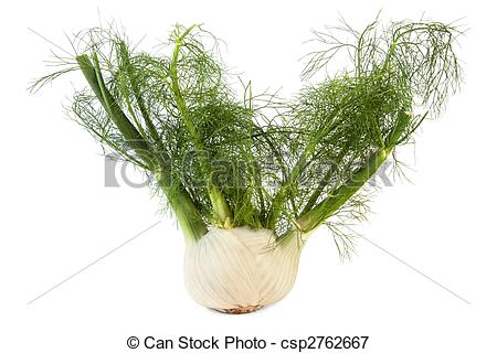 Picture of Fennel Bulb.