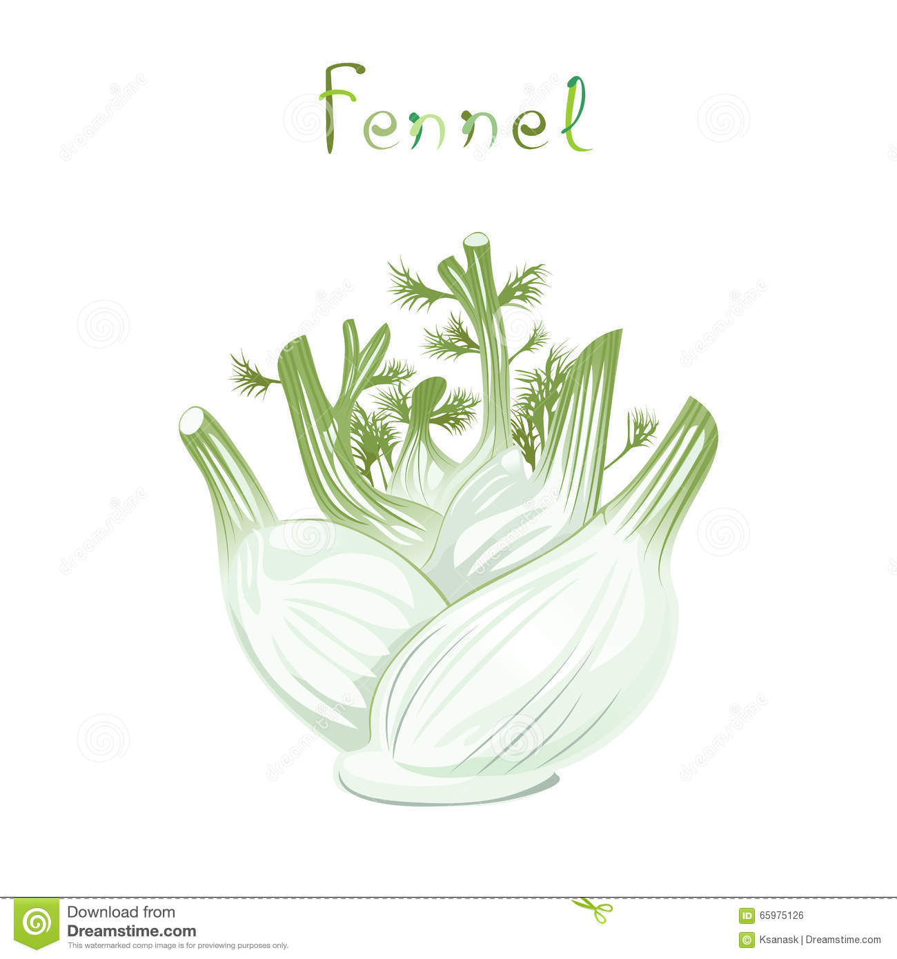 Fennel Bulb Stock Vector.