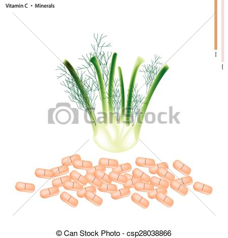 Clip Art Vector of Fennel Bulb with Vitamin C and Minerals.