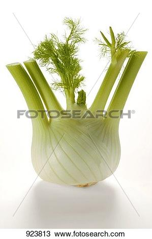 Stock Photo of Fennel bulb 923813.