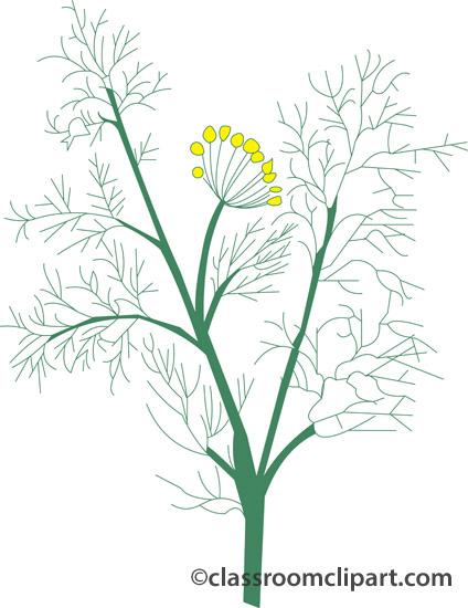 Herbs : fennel_407 : Classroom Clipart.