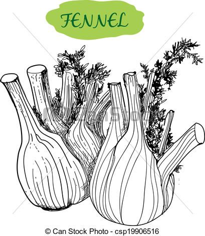 Fennel Illustrations and Stock Art. 523 Fennel illustration and.