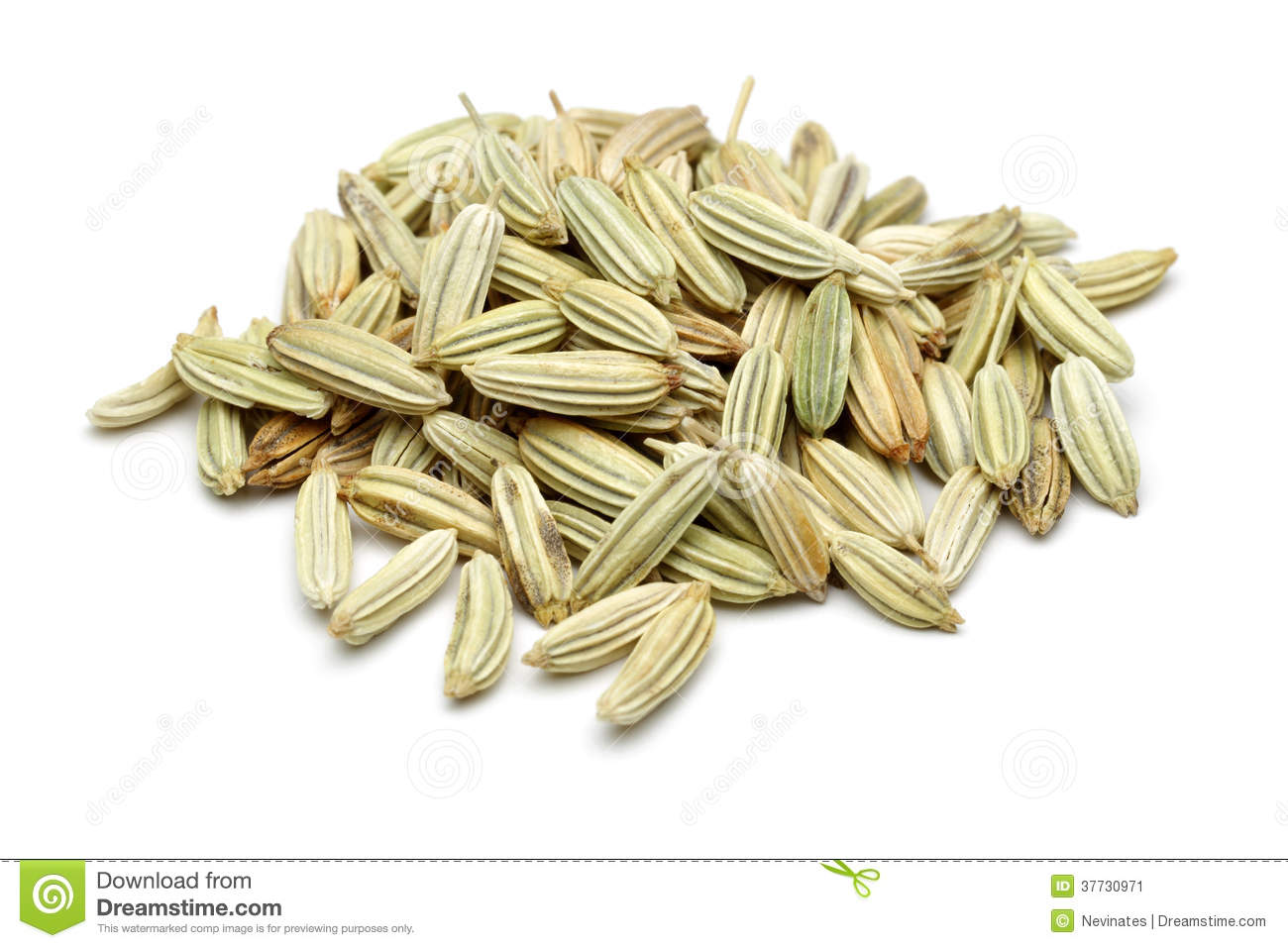 Fennel Seeds Stock Image.