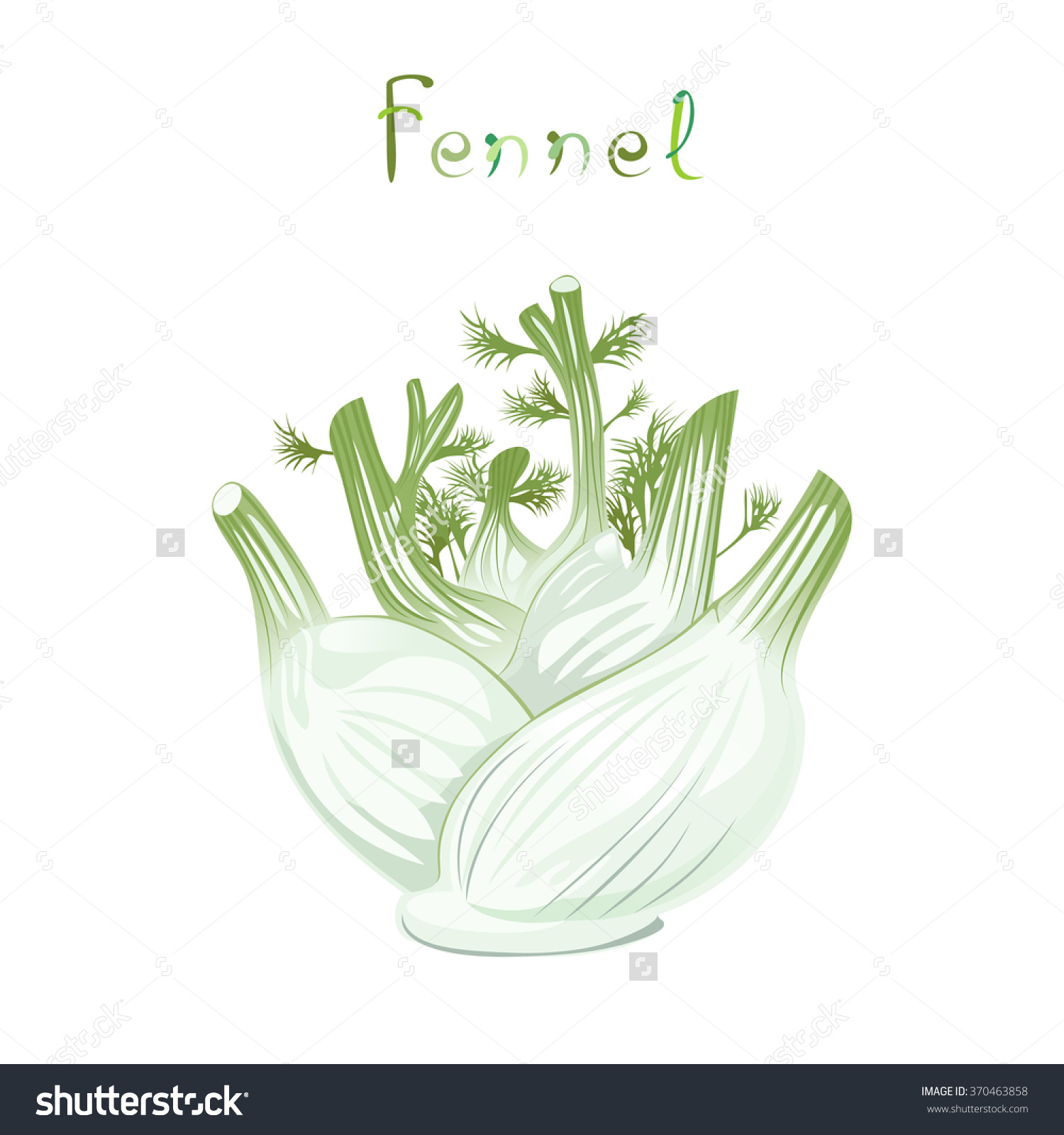Fennel Bulb Illustration Fresh Vegetable Cartoon Stock Vector.